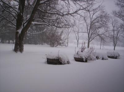 My Negiborhood Covered In Snow