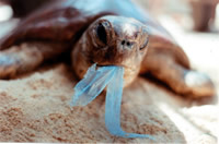 Plastic and jellyfish look the same, plastic kills