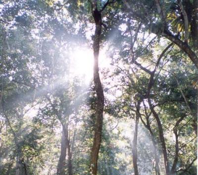 Environmental preservation
