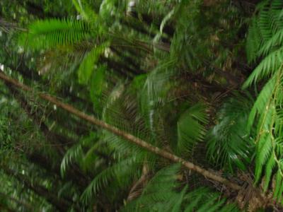 Dense, lush forest