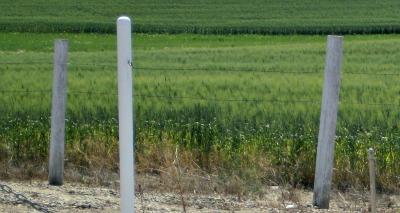 Great Manitoba farmland in Summer