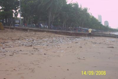 Plastic Kills Sea and Land Life