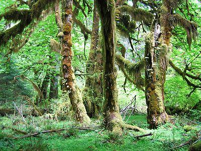 Lush green Jungle