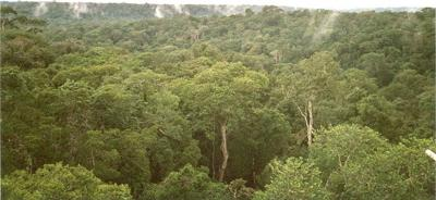 South American Rain Forest