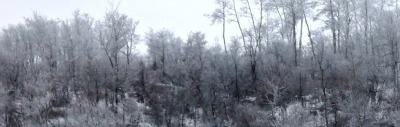 Lovely White Forest