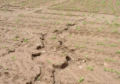 Soil losses means loss of jobs for Soil conservation act