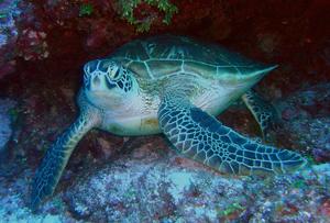 Marine Biology Jobs