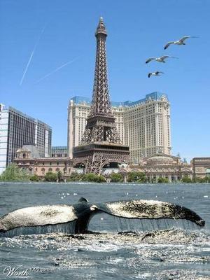 WHALES IN PARIS coming soon........