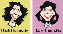 Hairstyle Humidity